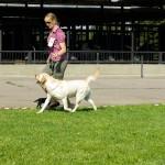 Näituseringis vaatab kohtunik koera liikumist