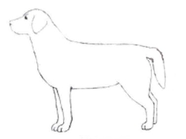 Vesisabaga koer