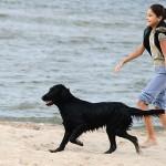 Inimene ja koer, 3. koht, Viktoria Nedvigina