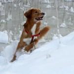 2012 talverõõmud 2.koht