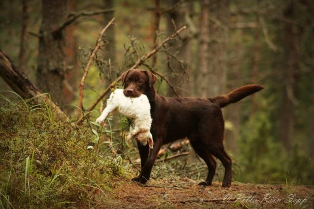 Pind käppa ja metsa!